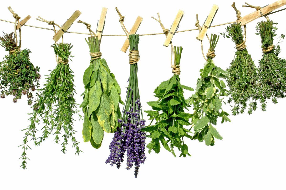 herbstodry