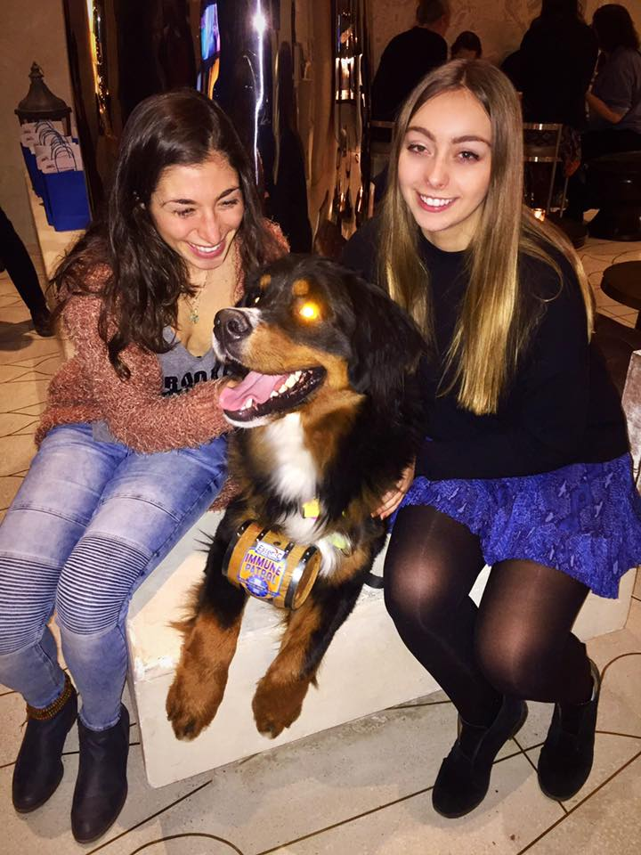 marmara-park-ave-blogger-mountain-dog